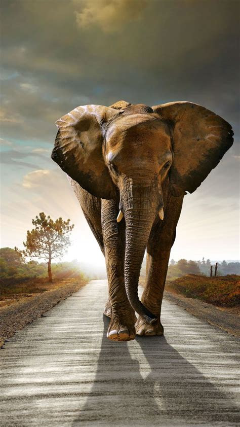wallpaper elephant sunset road nature animals