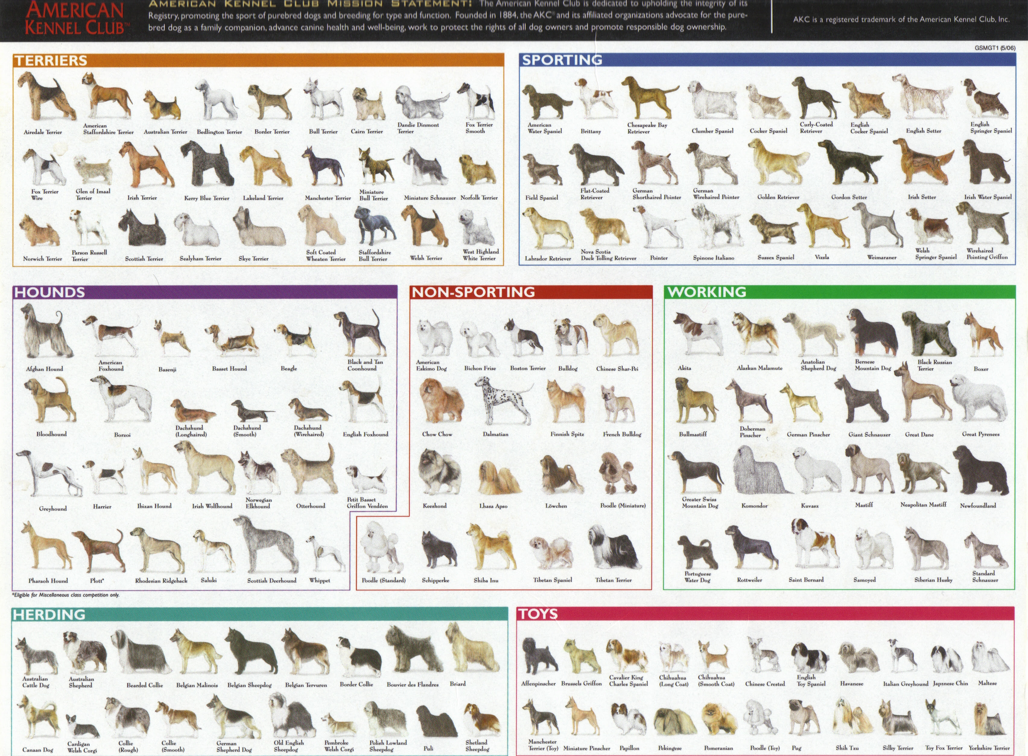 Dog Breed Search Dog Breeds