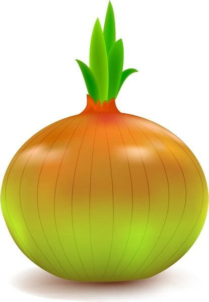 Onion free vector download (153 Free vector) for