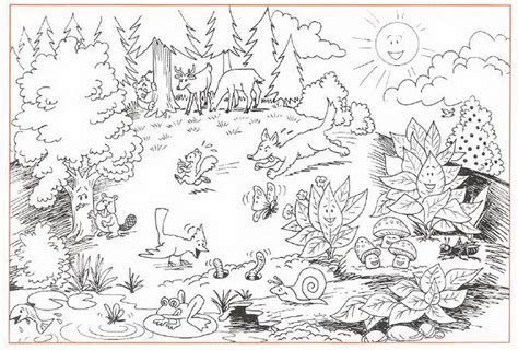 ecosystem coloring sheet sjhicks wikispaces