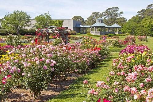 Bicentennial Rose Garden by bahayla