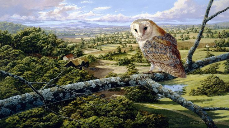English  barn Owl Painting