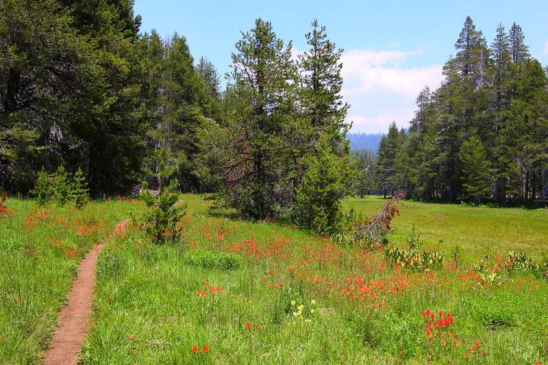 IMG_4441 McGurk Meadow