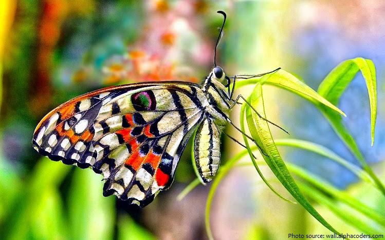 πεταλούδα-2