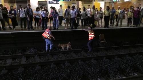 最新影片證港鐵再講大話 阻市民救狗視「未雪」如炸彈