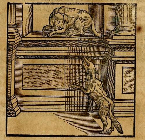 Canis et Lupus
