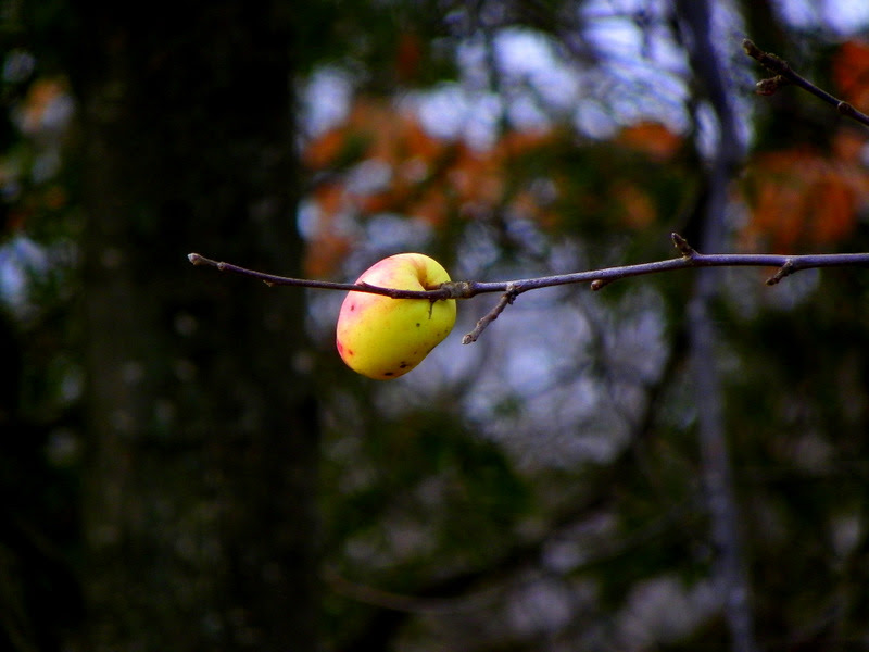 When the apple is ripe, it will fall... Or will it?