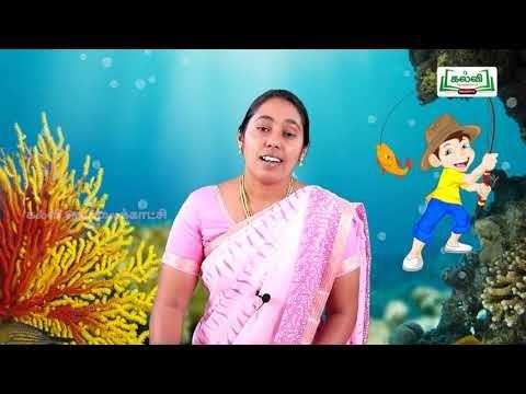 4th English Anbu and the Fish Unit 2 Part 2 Kalvi TV