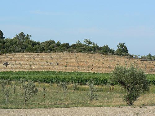 oliviers de Peyrassol.jpg