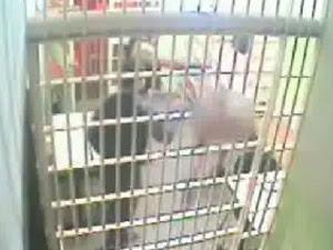 Imagem mostra padre sendo agredido por policial em delegacia