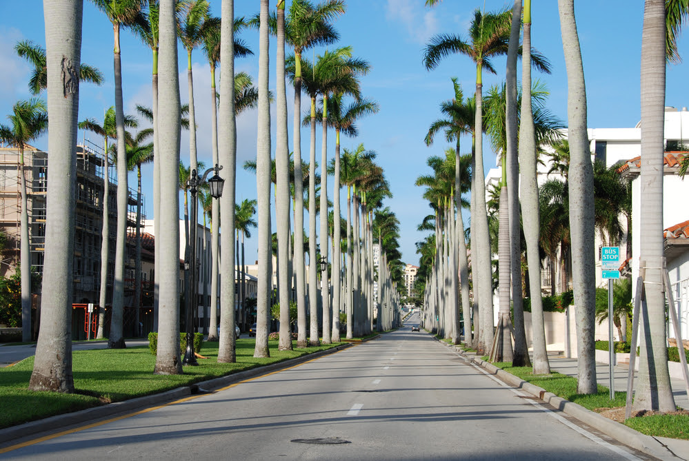 Uf Faculty Help Keep Palm Trees Part Of Floridas Fabric Southeast