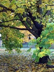 Foliage_102810d