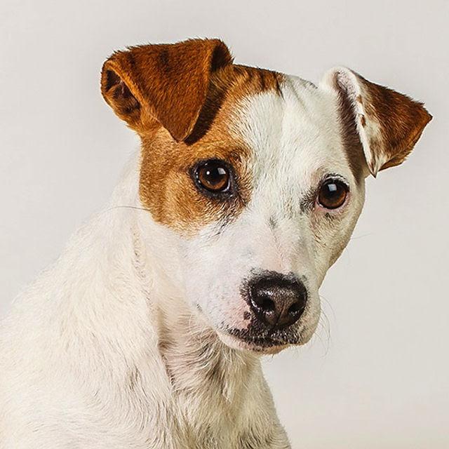 Retratos de cães cheios de personalidade 05