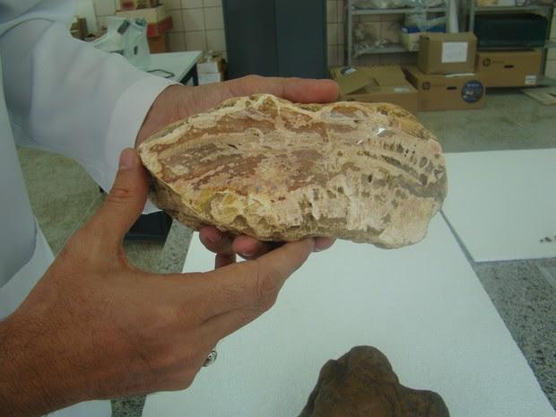 Fóssil encontrado data da época em que os continentes estavam todos juntos e era chamado de Pangeia (Foto: Patrícia Andrade/G1)