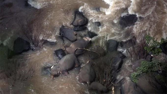 Seis elefantes pierden la vida tras caer por una cascada tratando de salvar al más pequeño