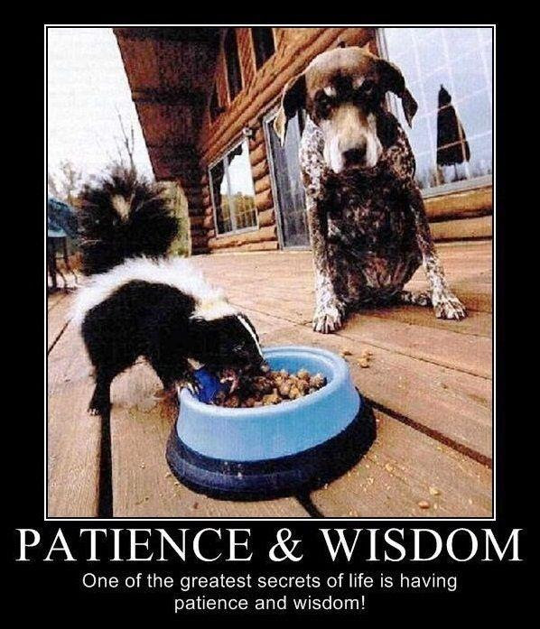 Patience And Wisdom One Of The Greatest Secrets Of Life Is