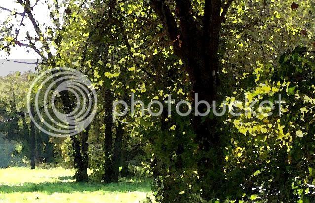 nava,trees
