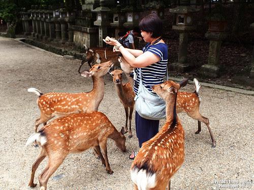 2012_Summer_Kansai_Japan_Day5-68
