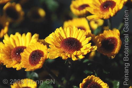 botanic_garden4