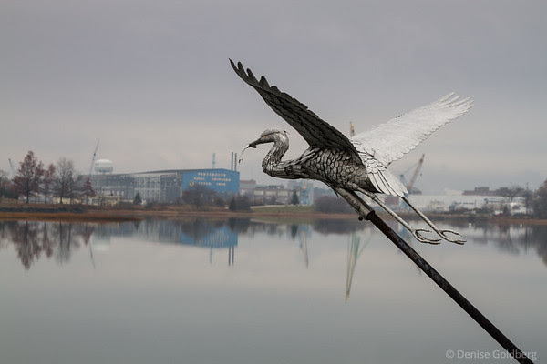great blue heron, flying high