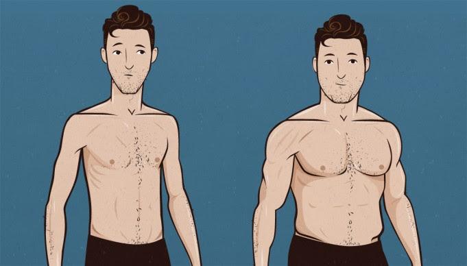 body fat percentage ectomorph