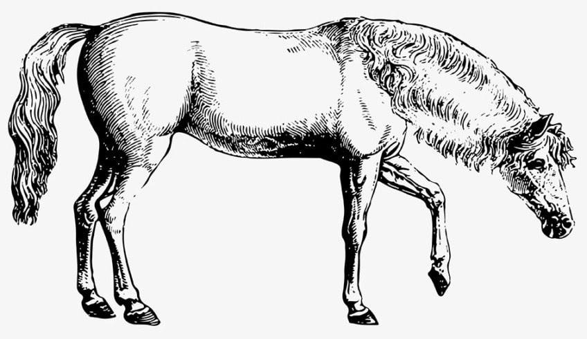 ausmalbilder pferde kinder  malbuch 32 malvorlagen pferde