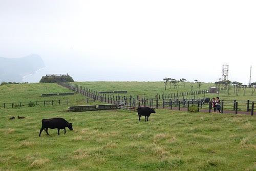 A farm in the mounten