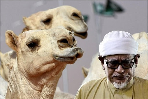 Hadi Awang - Camel