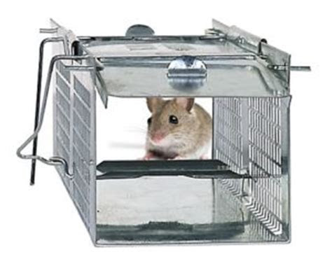 Top 3 Humane Mouse Traps Reviewed   Pros and Cons of the Best