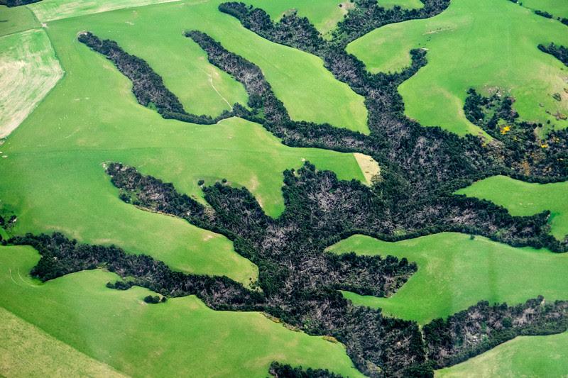 Strange field pattern North of Dunedin