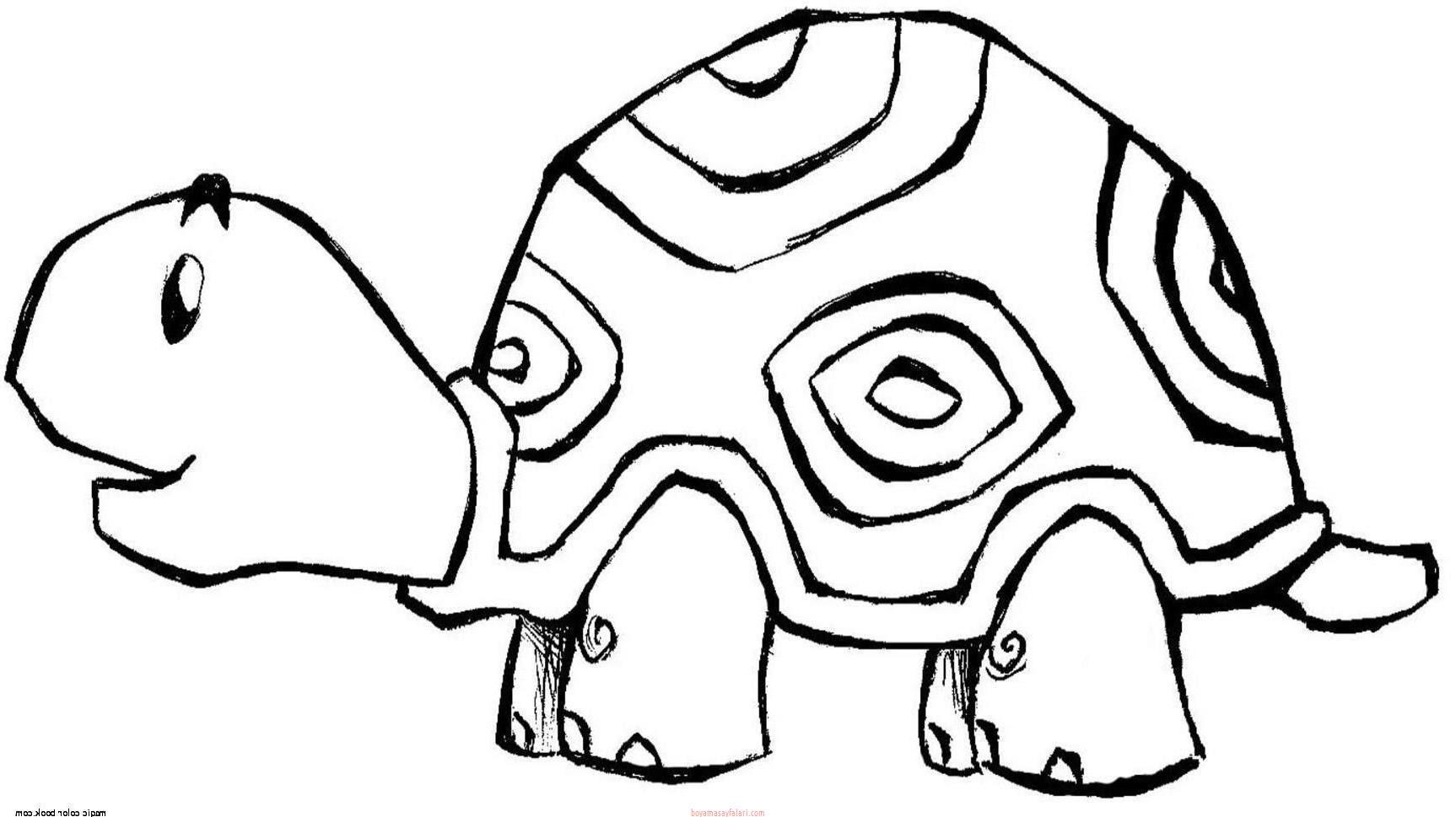 Kaplumbağa Boyama Sayfaları 10 Sınıf öğretmenleri Için ücretsiz