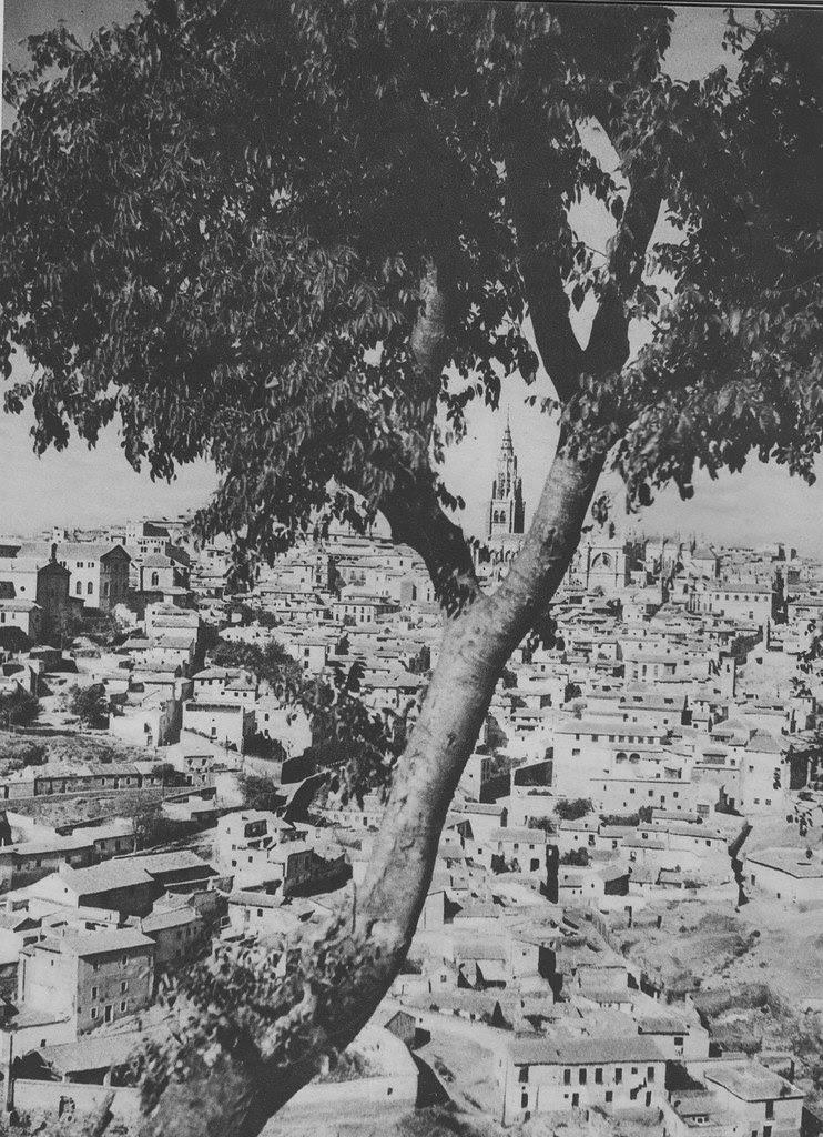 Enorme almez de la ermita del Valle a principios del siglo XX