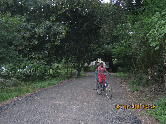 Tree lined road to Pinnacle Cottage Close at 'Abhiruchi Village' on Sinhagad Road Pune 411 041