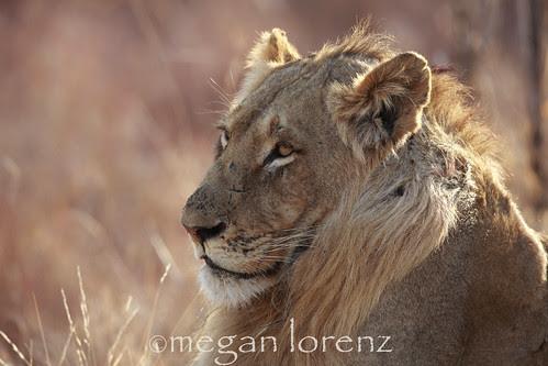 Relaxing in the sun... by Megan Lorenz