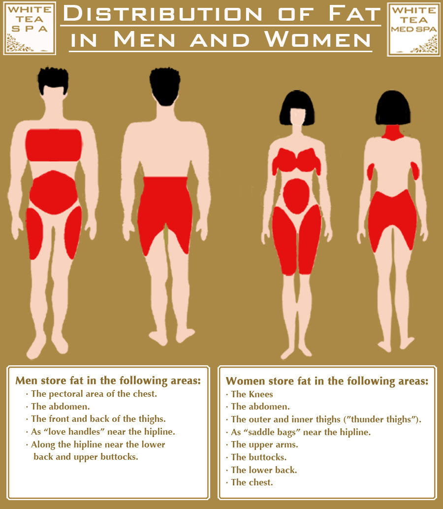 anorexia and body fat percentage