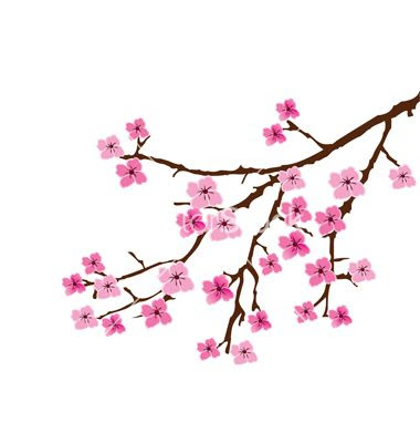 Cherry Blossom Petal Vector At Getdrawingscom Free For Personal