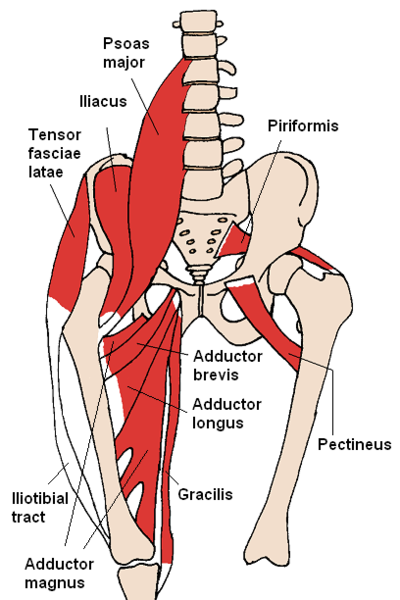 Low Back Muscles Hip - Not All Back Pain is Created Equal Pt.1 - The Human Body Shop