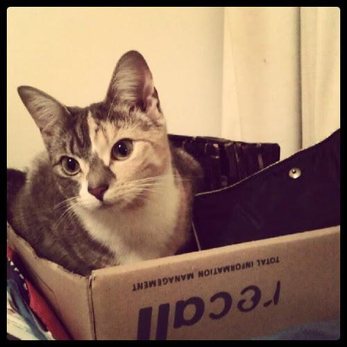 Kitteh in filing pile.