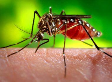 Salvador recebe prêmio por melhor trabalho de monitoramento do vírus Zika do país