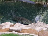 Coccodrillo al Currumbin Wildlife Sanctuary