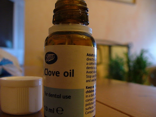 7179207116 d1fe4b7c3c The Miracle of Cloves and Clove Oil