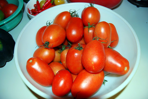 sauce tomatoes from the farm