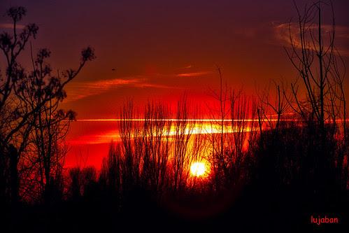 Red sundance by lujaban