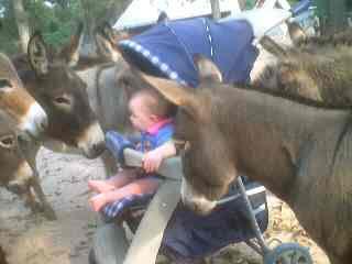 delanee&donkeys-11-11-01-web