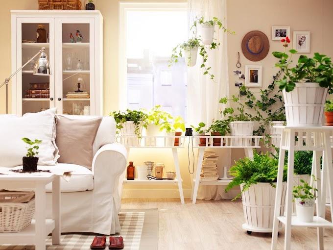 Hiasan Pojok Ruang Tamu | Ide Rumah Minimalis