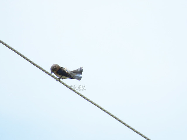 IMG_2888Bluebird