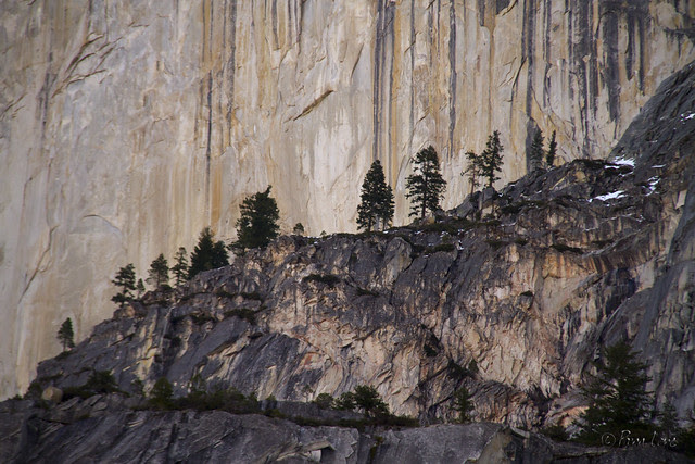 Yosemite Half Dome trees