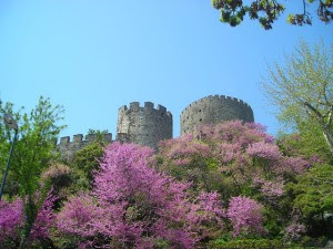 Árbol del amor junto a al fortaleza de Rumelia