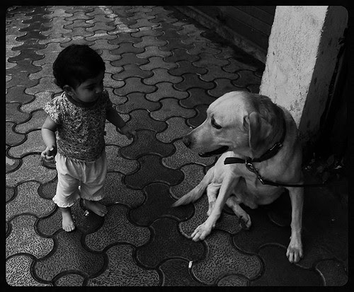 Even Dogs Cannot Survive On Rs 12 Meal..Eat Your Words Out by firoze shakir photographerno1