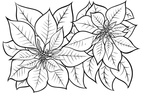 Poinsettia Coloring Page Free Printable Coloring Pages
